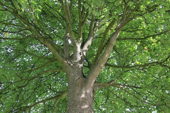 tree-2665288_1920
