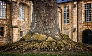 tree-3260164_1920