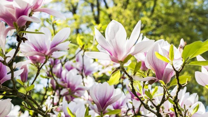 flower-3339266_1920